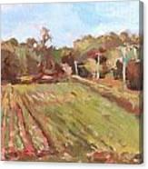 Cedar Creek Corn Canvas Print
