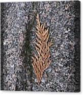 Cedar On Granite Canvas Print