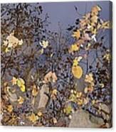 Cedar Rock Canvas Print