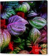 Celosia Canvas Print
