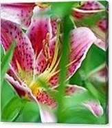 Central Park Lily Canvas Print
