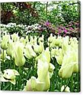 Central Park Tulips Canvas Print