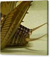 Cerci Of Cave Cricket Canvas Print
