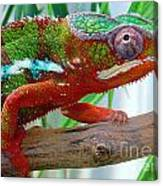 Chameleon Close Up Canvas Print