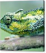 Chameleon In The Forests Of Mt Meru Canvas Print
