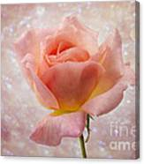 Champagne Rose. Canvas Print