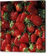 Chandler Strawberries Canvas Print