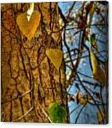 Changing Leaves And A Cottonwood Trunk Canvas Print