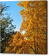 Changing Leaves Canvas Print