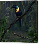 Channel Billed Toucan Canvas Print