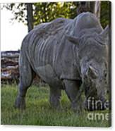 Charging Rhino. Canvas Print