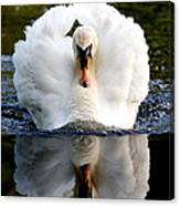 Charging Swan Canvas Print