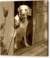 Charleston Shop Dog In Sepia Canvas Print