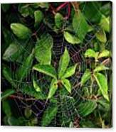 Charlotte's Web Canvas Print