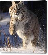 Chase In The Snow Canvas Print