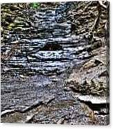 Chasing The Eternal Flame At Chestnut Ridge Park Canvas Print