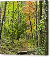 Chatooga Forest Trail Canvas Print