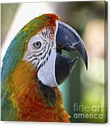 Chatty Macaw Canvas Print