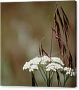 Cheatgrass And Common Yarrow Canvas Print