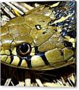 Checkered Garter Snakes Head Canvas Print