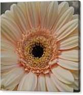 Cheeriest Flower Canvas Print