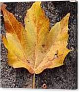 Cheerio Leaf Canvas Print