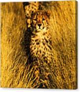Cheetah Cubs Canvas Print