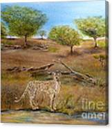Cheetah Stops To Take A Drink Canvas Print