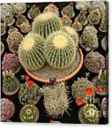 Chelsea Flower Show Cacti Display Canvas Print