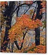 Cherohala Maple - D007676 Canvas Print