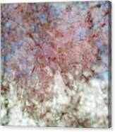 Cherry Blossom Abstract Canvas Print
