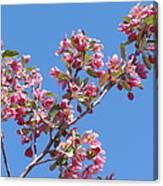 Cherry Blossom Branch Canvas Print