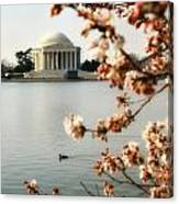Cherry Blossom In Dc Canvas Print