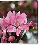Cherry Blossom Photo Art And Blank Greeting Card Canvas Print