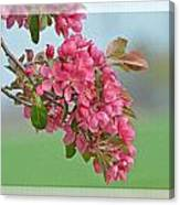 Cherry Blossom Spring Photoart Canvas Print