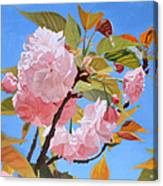 Cherry Blossom Time Canvas Print