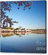 Cherry Blossoms Along The Tidal Basin Canvas Print