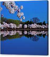 Cherry Blossoms And The Tidal Basin Canvas Print