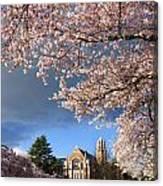 Cherry Blossoms At University Of Washington Canvas Print