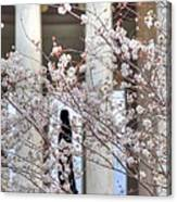 Cherry Blossoms Washington Dc 1 Canvas Print