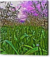 Cherry Orchard After The Storm Canvas Print