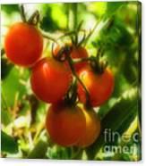 Cherry Tomatoes On The Vine Canvas Print