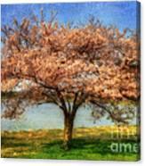 Cherry Tree Canvas Print