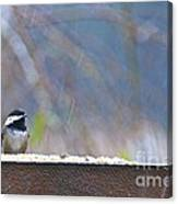 Chestnut-backed Chickadee In The Rain Canvas Print
