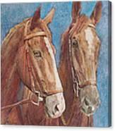 Chestnut Pals Canvas Print