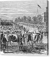 Chicago: Cattle Market Canvas Print