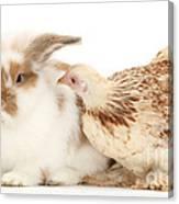 Chicken And Rabbit Canvas Print
