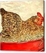 Chicken Hen Painting Art Print Canvas Print