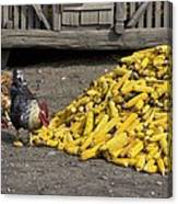 Chickens Eating Corn Canvas Print