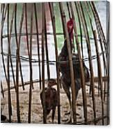 Chickens In Bamboo Cage Canvas Print
